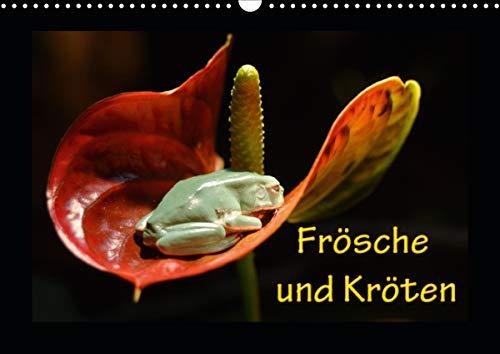 Frösche und Kröten (Wandkalender 2021 DIN A3 quer)