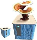 Rowe Kit de Crecimiento de Hongos Indoor Organic Oyster Mushroom Mycelium Spawn Spores Bag Kit Completo para la Cocina Balcón Dormitorio Sala de Estar Oficina Kindergarten