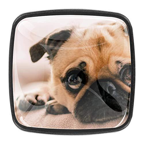 4 pomos redondos de cristal para cajón de 30 mm, pomos para armario, tiradores para perros, animales