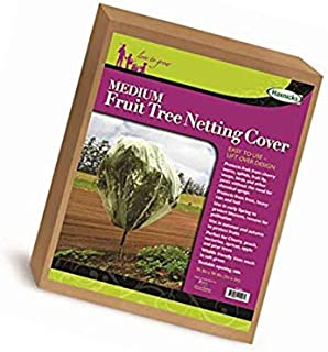 Time To Plant Dwarf Fruit Trees