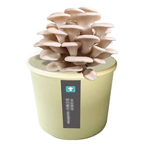 DRSM Grow Your Own Bonsai Kit, para niños y Principiantes, Alrededor de 15-25 días, Kit de Semillas único Idea de Regalo Seta Verde-Blanca ostra