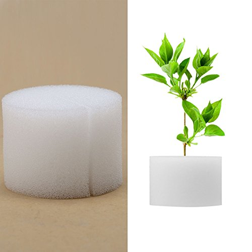 Zerodis Hydroponik Schwämme Soilless Gemüseanbau Gartenbau Gemüse Pflanze Pflanzenwachstum 50Pcs(32mm / 1.3) - 4