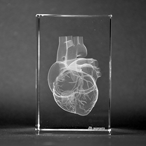 Crystal 3D Human Heart with Coronary Artery 1lb 2 x 2 x 3 Inches Optical Glass Paperweight