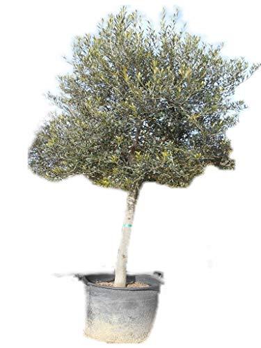 olivier promo