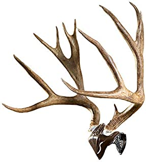 Best camo european deer mount kit Reviews