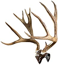 Skull Hooker Bone Bracket European Trophy Mount with Skull Cap Included – Perfect Kit for Hanging and Mounting Capped Skul...