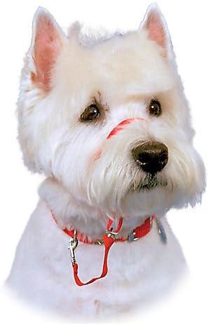 The Company of Animals Austin Bombing new work Mall - Headcollar HALTI Padde and Adjustable