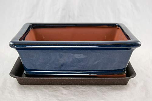 Rectangular Dark Blue Bonsai, Cactus, Succulent Pot 10'x 8'x 3.25' +Tray + Mesh