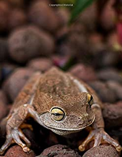 Notebook: Frogs Amphibians Toads Terrarium Water Pond Creek Habitat Conservation Toad Amphibian