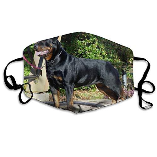 Rottweiler Hond Afbeeldingen Rottweiler Hond Desktop s Cool Unisex Volledige Coverage Buis Gezicht Masker Bandanas UV Bescherming Hals Gaiter Hoofdband