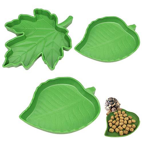 Leaf Turtle Food