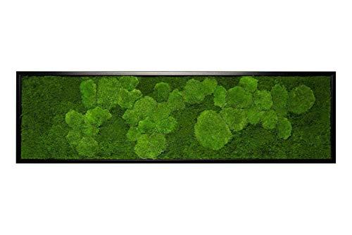 Moosbild Pflanzenbild mit Kugelmoos und Flachmoos versch. Maße günstig