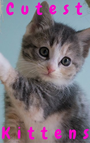 Cutest Kittens 1500 Picture Cutest Kittens Cats Photobook For Kids Baby Kittens Cats Dogs Cute Fluffy Animals For Children Cat Memes Cat Photobook Bybee Cat School Cutest Kitt 10 Ebook Cosmo Kitten Amazon Com Au Kindle