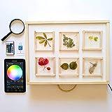 R-Crea Mesas de luz Montessori RGBW- 64x48x7 Color Natural - Certificadas por la Universidad de Murcia