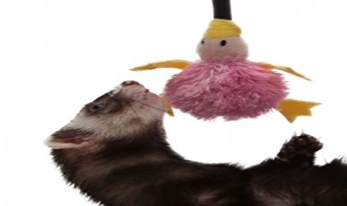 Marshall Pet Bungee Platypus Ferret Toy