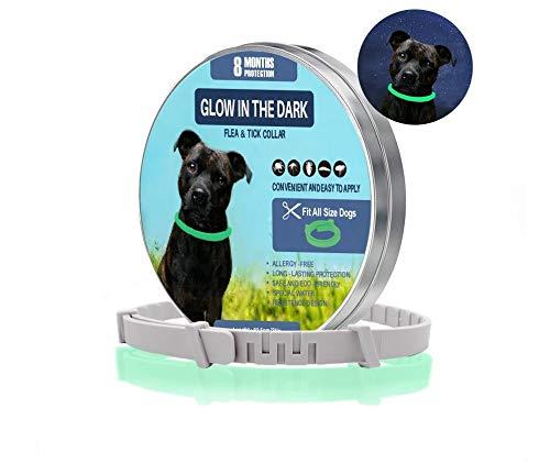 Generisch Zeckenhalsband für Hunde und Katzen | Leuchtendes Präventionshalsband gegen Parasiten mit bis zu 8-Monatigen Schutz | Fluoreszierendes Halsband universell auf Jede Größe verstellbar