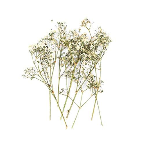 KXLBHJXB 10 Stück/Beutel Getrocknete Blumen und getrockneten Pflanzen, verwendet for Epoxy UV-Harz-Anhänger Halskette, die Prozess-DIY-Kunst-Dekoration Zubehör Getrocknete Blumen (Color : W)
