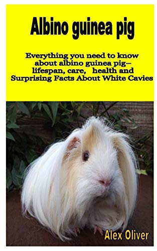 ALBINO GUINEA PIGS: Everything you need to know about albino guinea pig– lifespan care health and Surprising Facts about White Cavies