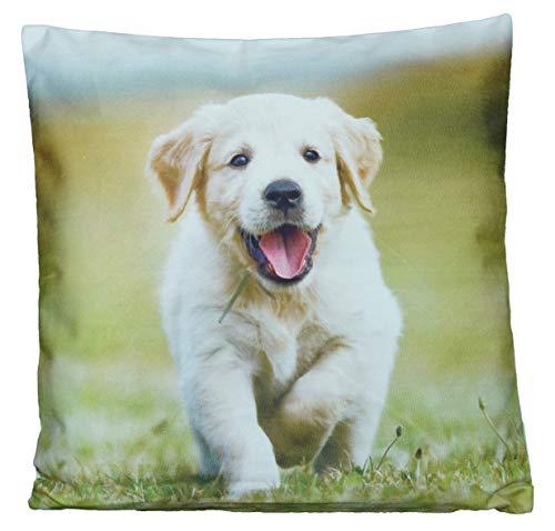 Kissenhüllen 40x40 cm Dekokissen Kissenbezug Fotokissen Kissen Hüllen Bezug Bezüge Hunde Dog (Retriever #4151)