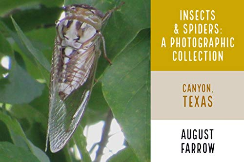Insects & Arachnids: A Photographic Collection: Canyon, Texas (Wildlife: Canyon, Texas) (English Edition)