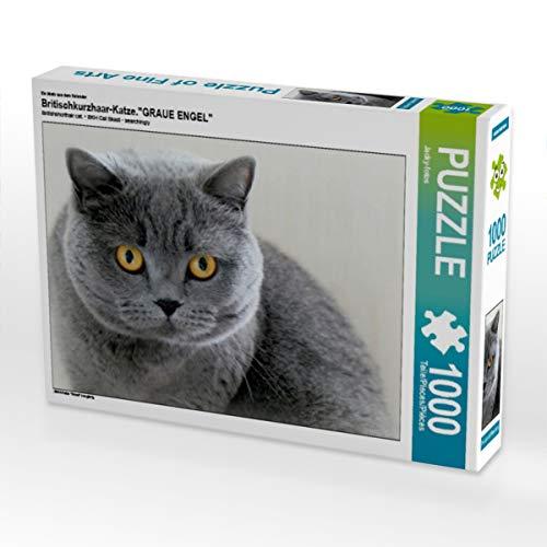 CALVENDO Puzzle Britischkurzhaar-Katze.EIN Motiv aus dem Kalender GRAUE Engel 1000 Teile Lege-Größe 64 x 48 cm Foto-Puzzle Bild von Jacky-Fotos