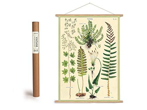 Cavallini Vintage Poster Set mit Holzleisten (Rahmen) und Schnur zum Aufhängen, Motiv Farn, Farne