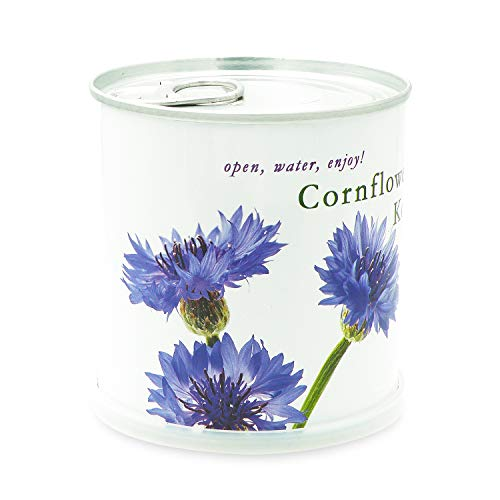 MacFlowers Kornblume - Blumen in der Dose