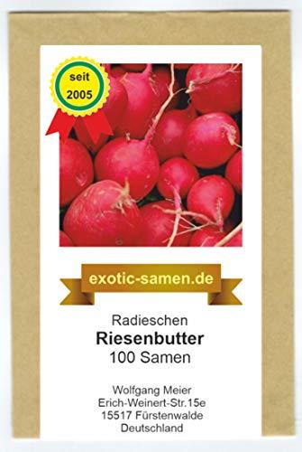 Radieschen - Radies - Riesenbutter (100 Samen)