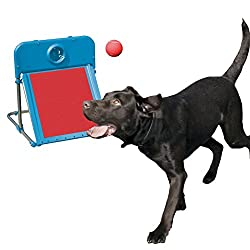 Rosewood Pet Agility Flyball Exercise Equipment