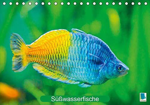Glanz im Aquarium: Süßwasserfische (Tischkalender 2020 DIN A5 quer): Aquarium: Prachtregenbogenfisch, Marmorskalar & Co. (Monatskalender, 14 Seiten ) (CALVENDO Tiere)