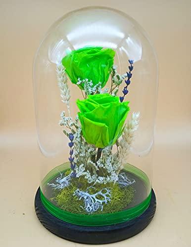 Rosas preservadas Verdes Lima. Rosas Rosa eternas Verdes. Cúpula Cristal. Altura 25 cm. Rosas Verdes preservadas. Hecho en España