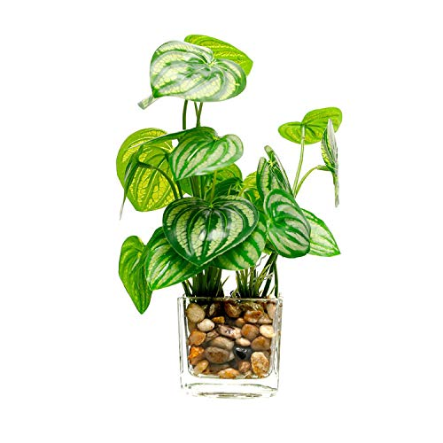 Dreamture Fake Grass Simulation Bonsai Potted Artificial Plants Leaf with Glass Pot Green Peperomia Clover Home Decoration-Watermelon Leaf-