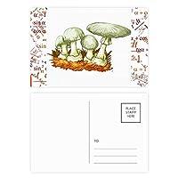 おいしい新鮮なマッシュルームを示す 公式ポストカードセットサンクスカード郵送側20個