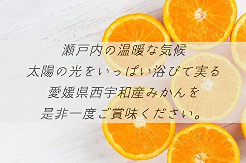 https://m.media-amazon.com/images/I/41vhBZ+0lEL.jpg
