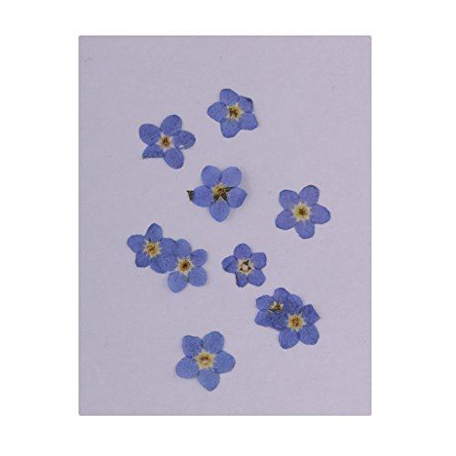 Echte Trocken Blumen Blüten Blätter getrocknete Blumen Kunstblumen Naturdeko für Scrapbooking Kunsthandwerk DIY Nail Deko - Vergissmeinnicht-Blumen