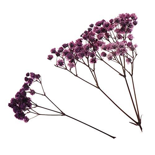 Plantas Prensas Flores Paniculata Secas Reales Flores Artificiales para Marcadores - 6 Colores Opcionales - Púrpura