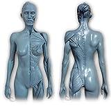 ZHANGYY Figura de anatomía Femenina - 30 cm Modelo anatómico Humano Cuerpo Escultura de Pintura de a...