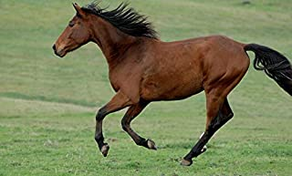 Home Comforts Games Freedom Gallop Horse Nature Vivid Imagery Laminated Poster Print 24 x 36