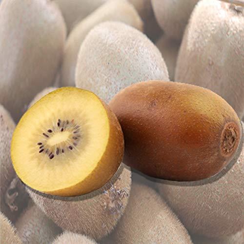 【ニュージーランド産】ゼスプリ サンゴールドキウイフルーツ 約1kg