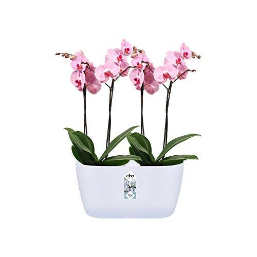 elho Bruxelles Orchidea Duo Vaso da Fiori, Bianco, 25cm