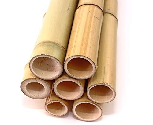 20er Set Bambusrohr gelb, Moso Bambus, Gebleicht, Durch. 3,5-4,5cm, Länge 300cm (BAYS3004)