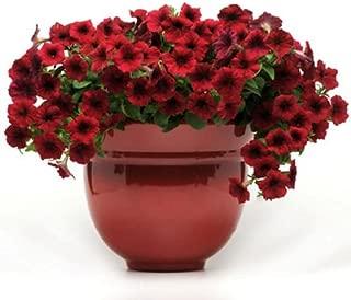 Petunia Easy Wave Velour Red Pelleted Flower Seed 100 Seeds