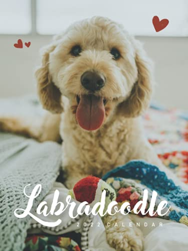 """Labradoodle 2022 Calendar: 12-month Calendar - Gorgeous Mini Calendar 6x8"""" for planners with large grid for note"""