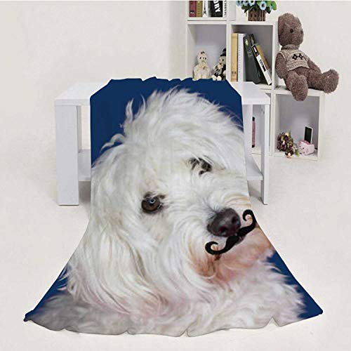 Dxichy Maltese Dog Tilting The - Side and Wearing A Fake Mustache.Isolated Against Blue Colored Background Spain,Flannel Blanket Super Soft Bed Blanket Weight Sofa Throw Blanket Animal 70''x8