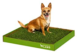 Buy DoggieLawn Disposable Dog Potty -Real Grass- Large