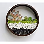 Ecosides Wall Mounted Planter Wall Hanging Planters Metal Plant Terrarium for Indoor Planter, Round Terrarium for Faux Flower Air Plant Holders Decorative Morden Circle Iron Vase for Succulent 16 Geometric metal wall planter is perfect for hanging succulents or office organization. Durably-constructed of metal in a classic and styled look. Perfect accent for any home or patio. Durably-constructed of metal in a classic and styled look. Perfect accent for any home or patio. Not only wall plaques or contemporary lighting can give a stunning look to your walls, hanging planters like this can also change your walls into something extraordinary. Plant some aromatic plants in this planter also bring some greenery effect to your space. Functional and chic it is perfect for expressing your style at home.