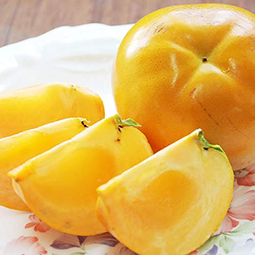 柿 太秋柿 4.5kg 秀品 大玉 L-2Lサイズ 福岡県産