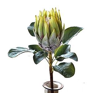 APRIL 3PCS Artificial Flower Protea Flowers Tropical Plant Decoration Flowers Artificial Protea Cynaroides Silk Flower for Floral Arrangements Home Party Wedding Decor