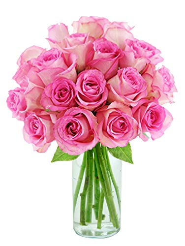 Purchase Now for Delivery by Wednesday | Arabella Farm Direct Bouquet of 18 Fresh Cut Pink Roses with a Free Glass Vase
