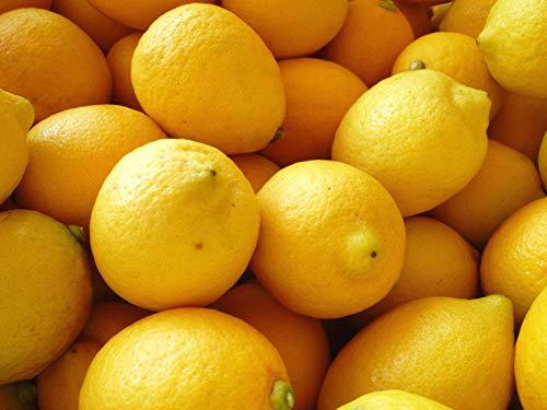 通販で買えるレモンのお取り寄せ人気おすすめランキング10選